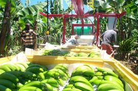 Banana Field Machinery